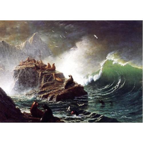 Seals on the Rocks Farallon Islands
