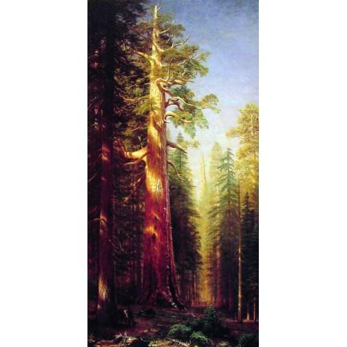 The Great Trees Mariposa Grove California
