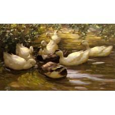 Enten in Wasser Unter Birken