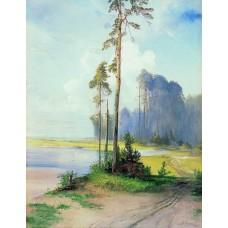 Summer landscape pines