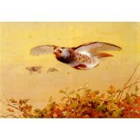 English Partridge In Flight