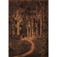 A birch grove 2