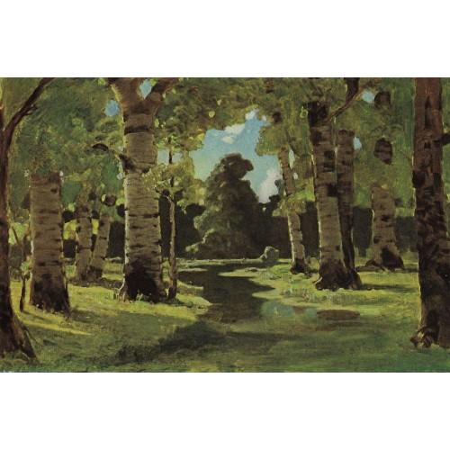 A birch grove 4