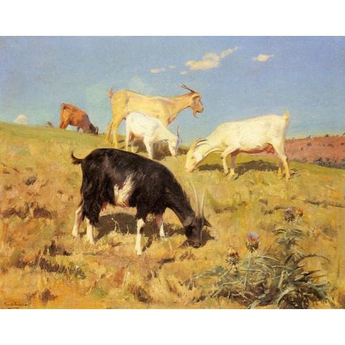 Goats Grazing on a Hillside