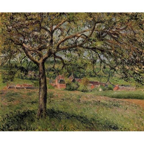 Apple Tree at Eragny