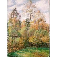 Autumn poplars