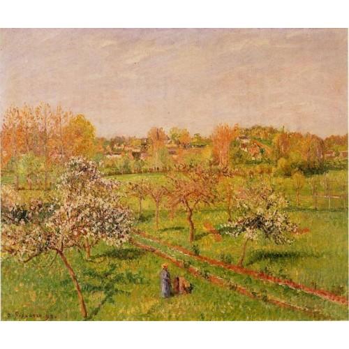 Morning Flowering Apple Trees Eragny