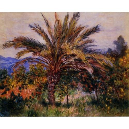 A Palm Tree at Bordighera