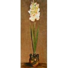 Gladiolus 1