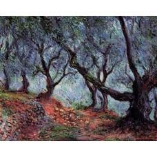Grove of Olive Trees in Bordighera