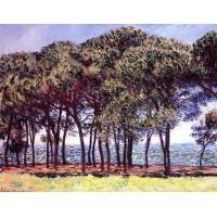 Pine Trees Cap d'Antibes