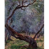 Study of Olive Trees
