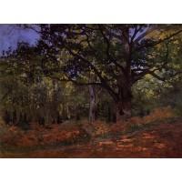 The Bodmer Oak Fontainebleau