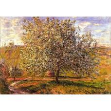 Tree in Flower near Vetheuil