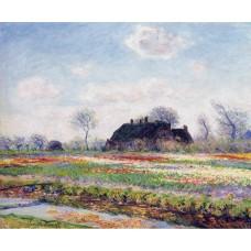Tulip fields at sassenheim near leiden