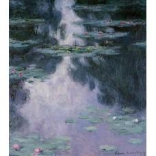 Water lilies nympheas