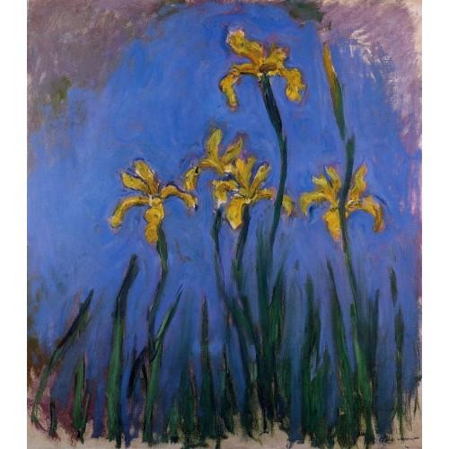 Yellow Irises 1