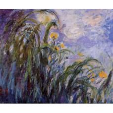 Yellow Irises 2