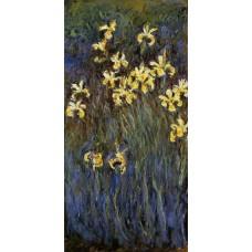 Yellow Irises 3