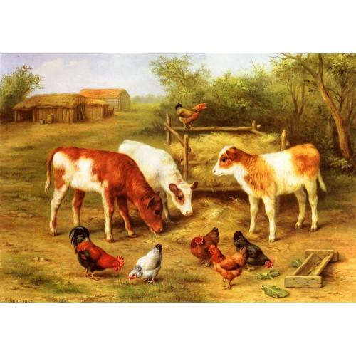 Calves and Chickens feeding in a Farmyard