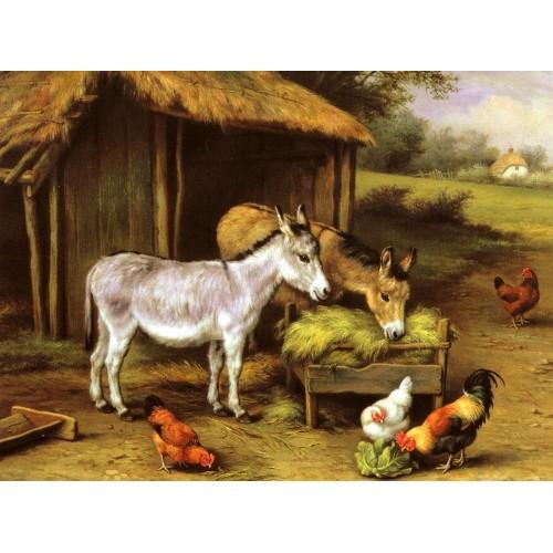 Chickens and Donkeys feeding outside a Barn