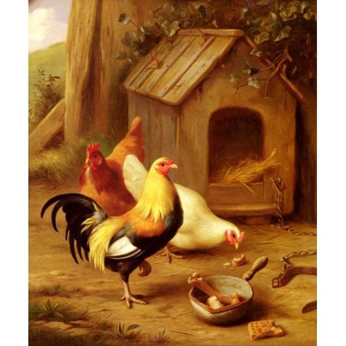 Chickens Feeding
