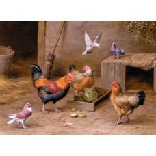 Chickens In A Farmyard