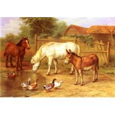 Ponies Donkey and Ducks in a Farmyard