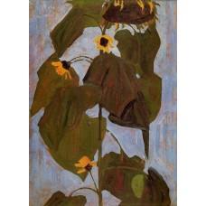 Sunflower 1