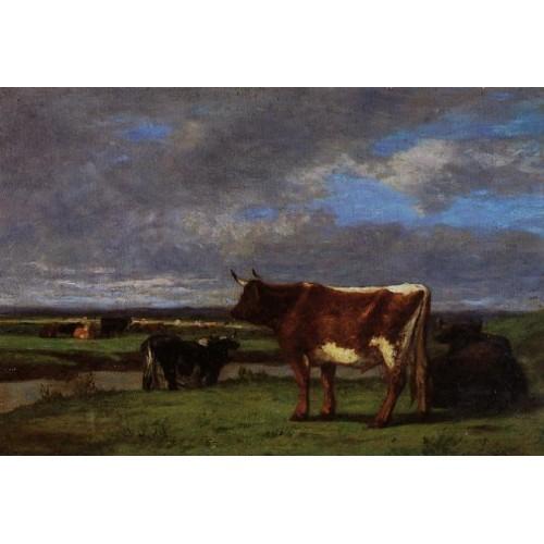 Cows near the Toques