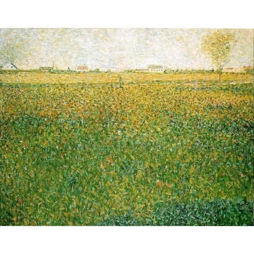 Alfalfa Fields Saint Denis