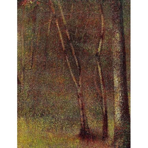 In the Woods at Pontaubert