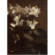 Flowers Cyclamens