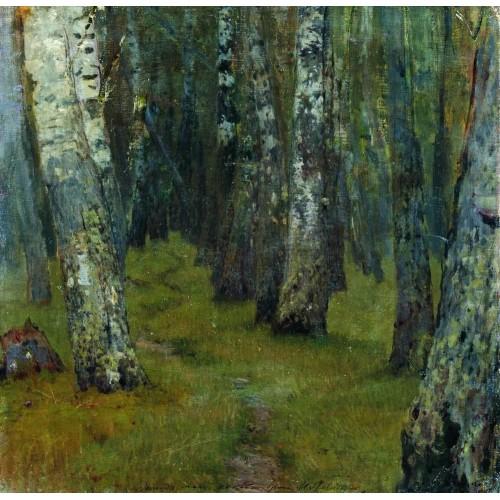 Birches forest edge