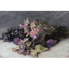 Coleus 1894