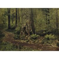 Footpath in a forest ferns