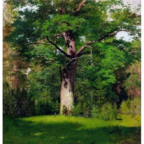 Oak 1880