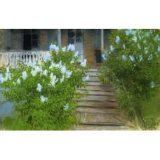 Spring white lilacs