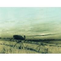 Stubbled field