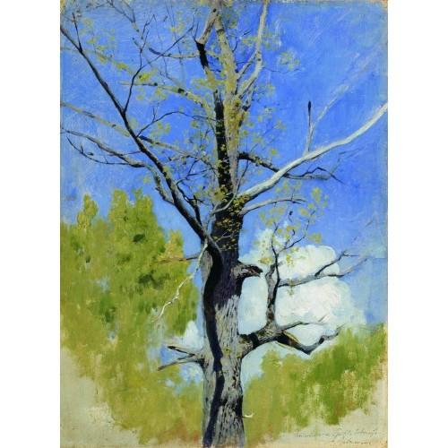 Trunk of burgeoning oak