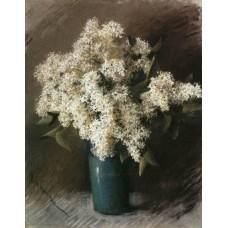 White lilac 1895