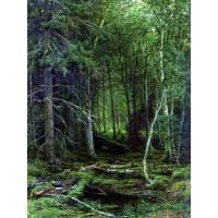 Backwoods 1872