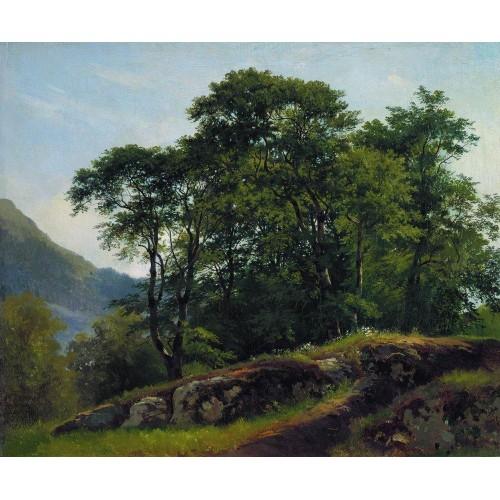 Beech forest in switzerland 1863