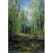 Birch grove 1875