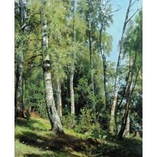 Birch grove 1896 1