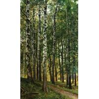 Birch grove 1896