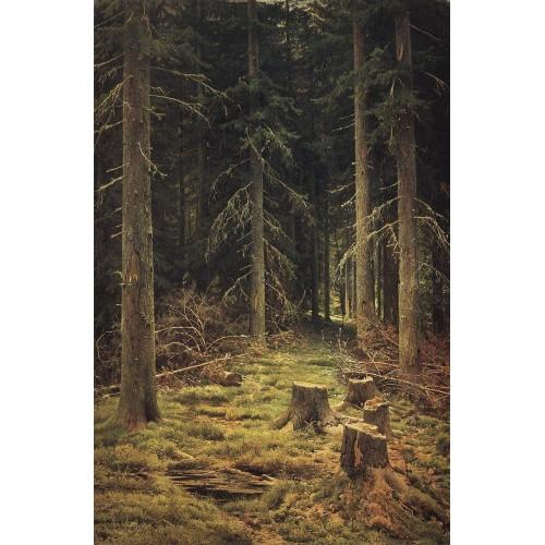 Coniferous forest 1873
