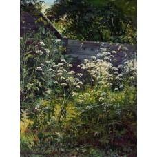 Corner of overgrown garden goutweed grass 1884