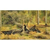 Fallen tree siverskaya