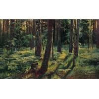 Ferns in the forest siverskaya 1883